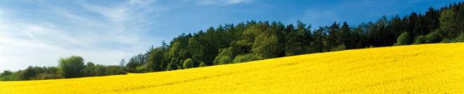 Biomassenutzung